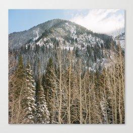 Snowbird II Canvas Print