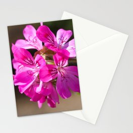 Pink Pelargonium Stationery Cards