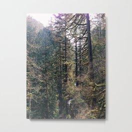 Mossy Northwest Trees Metal Print
