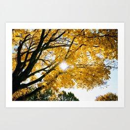 Fall Sunshine Art Print