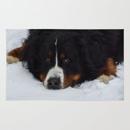 Bernese mountain dog in snow. Rug