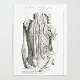 Human Anatomy Art Print WOMEN BACK MUSCLE Vintage Anatomy, doctor medical art, Antique Book Plate Poster