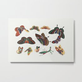 Chinese butterfly and insect painting from the Qing Dynasty (1644-1911) by anonymous Metal Print