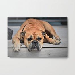 Bulldog waiting for family Metal Print