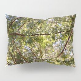 Redwood Ceiling  Pillow Sham