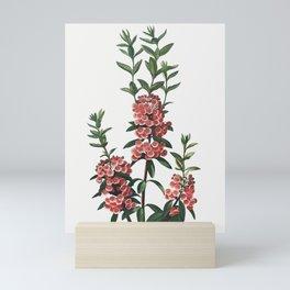 The Narrow–Leaved Kalmia Illustration Mini Art Print