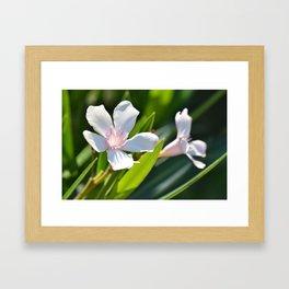 Olender 143 Framed Art Print