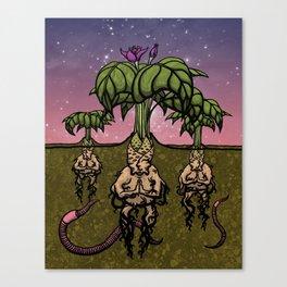Mandragoran Meditation Canvas Print