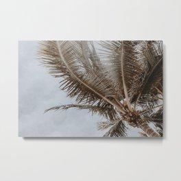 palm tree v Metal Print