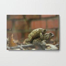 Horny Toads Metal Print