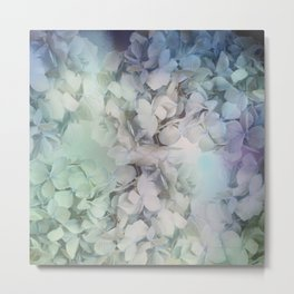 Artistic Hydrangea flowers in soft blue and purple Metal Print
