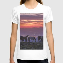 Wild horses at the mountains. Sierra Nevada National park just after sunset T-shirt