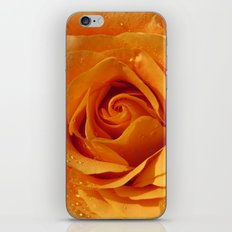Gold Rose Bud- Orange Roses and flowers iPhone & iPod Skin