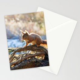 Squirrel on branch Stationery Cards