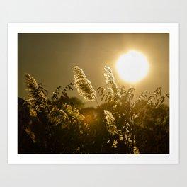 Golden Marsh Weeds Beach Grass Sunset Botanical / Nature Photograph Art Print
