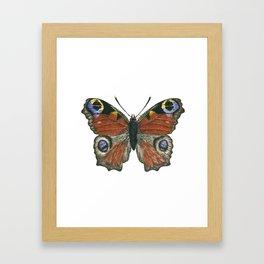 Peacock butterfly Framed Art Print