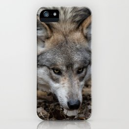 Mexican Gray Wolf iPhone Case
