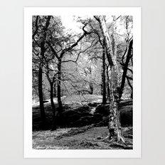 Central Park Trees Art Print