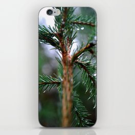 Rain covered Conifer iPhone Skin