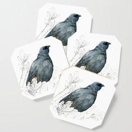 Kōkako, New Zealand native bird Coaster