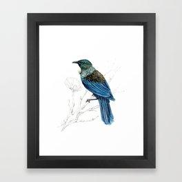 Tui, New Zealand native bird Framed Art Print