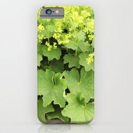 Ladies' Mantle iPhone Case