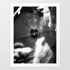 spider web 2016 Art Print