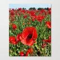 Poppy in a Field 2 by peoniesandsteel