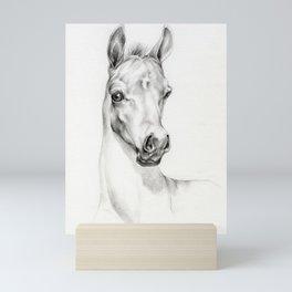 Arabian Horse Foal Portrait Graphite pencil drawing Equine illustration Mini Art Print