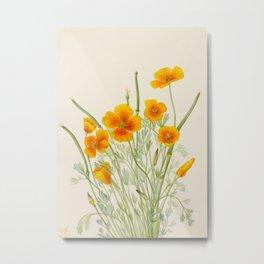 Mexican Poppy Vintage Botanical Print Metal Print