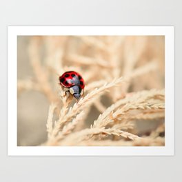 The Wandering Ladybird Art Print