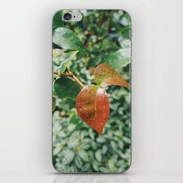 Plantae V iPhone Skin