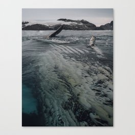 Playful Humpback Canvas Print