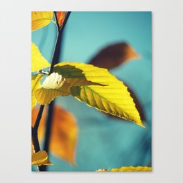 Famous fall 19 Canvas Print
