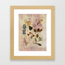 Botanical Study #1, Vintage Botanical Illustration Collage Framed Art Print
