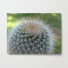Cactus Cynara Cardunculus Metal Print
