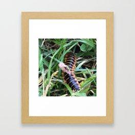 He Scuttles Away Framed Art Print