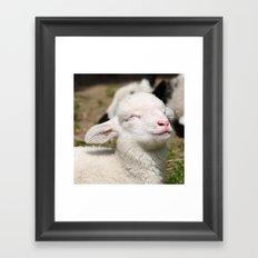 Spring lamb Framed Art Print