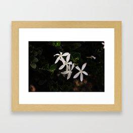 white plumeria Framed Art Print