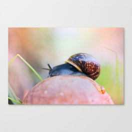 Where am I Canvas Print