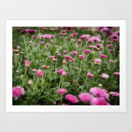 Field of Pink Art Print