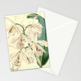 Cattleya maxima Stationery Cards