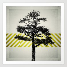 Ulmus parvifolia (Defying the Odds) Art Print