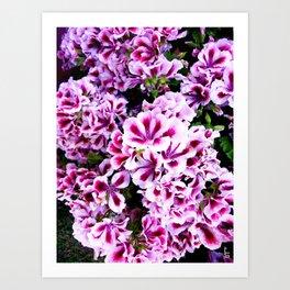 Martha Washington Geranium I Art Print