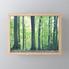Beech Trees Framed Mini Art Print
