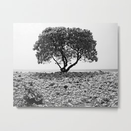 Solitary Tree Springing From Waikoloa Coral - Hawaii - Black and White Metal Print