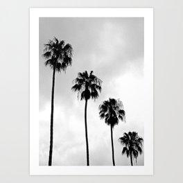 Palm Tree Noir #67 Art Print