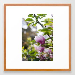 Magnolia | Tulip Tree Framed Art Print