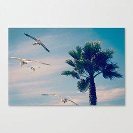 Shell Beach, USA Canvas Print