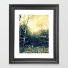 Radiant Pine Trees Framed Art Print